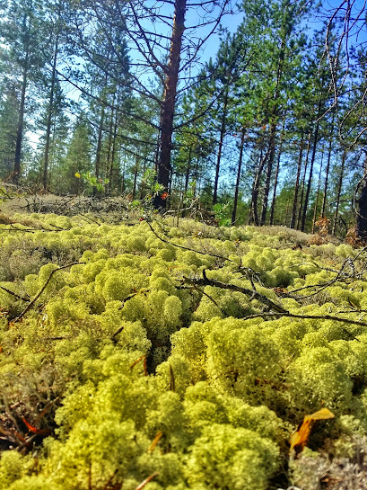 Green moss can be found on parts of the trail while hiking along the Siiponjoki near Kalajoki in Finland.