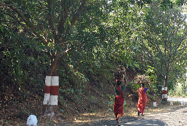 two women carrying firewood on country road