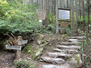 株杉の森へ