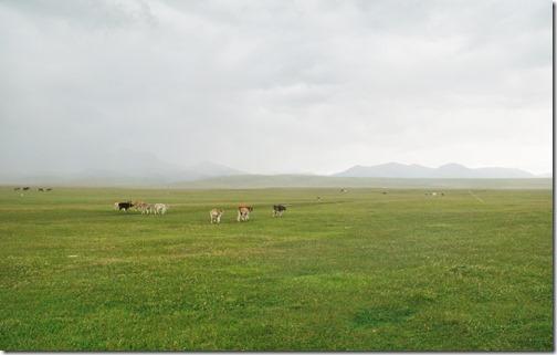 Kyrgyzstan50