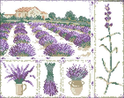 Lavender field 5824 chart