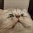 julien vincent avatar image