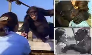 Adorable Moment A Chimp Smiles And Hugs The Woman Who Saved Her From A Lab 25 Years Ago