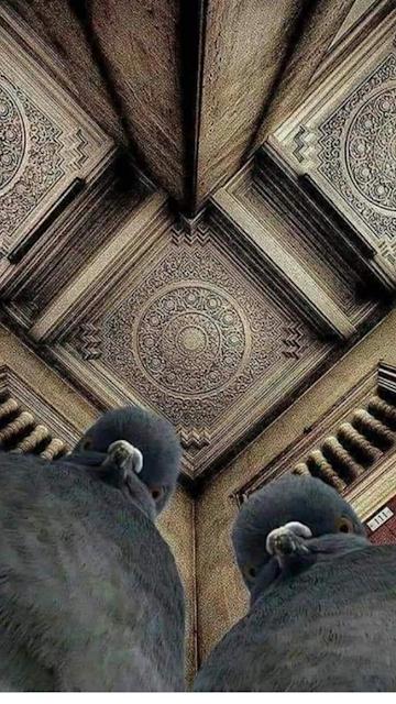 smijesne slike goluba