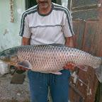 Mihálykövi József 9,6 kg