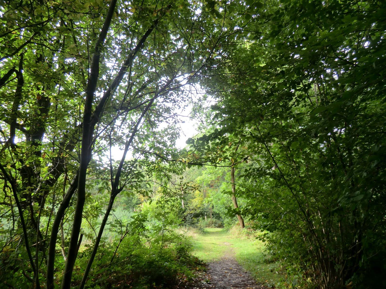 CIMG4231 Selsdon Wood
