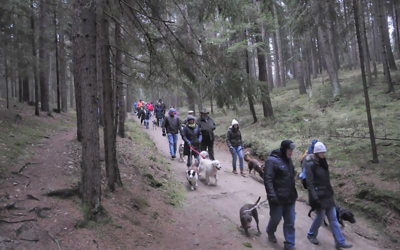 20140101 Neujahrsspaziergang im Waldnaabtal - DSC_9810.JPG