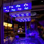 2010 MACNA XXII - Orlando - DSC01567_2.jpg