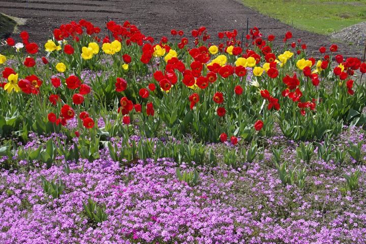 写真:町を彩る鮮やかな花達