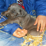 Star & True Blues February 21, 2008 Litter - HPIM1013.JPG