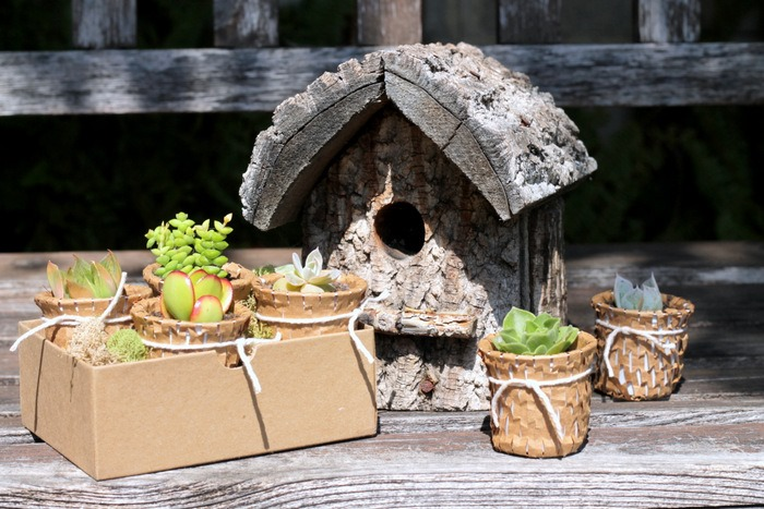 Recycled K Cup Succulent Pots - homework (5)