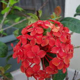Gardening 2012 - 115_1581.JPG