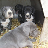 Star & True Blues February 21, 2008 Litter - HPIM1095.JPG