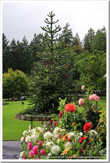160906_Butchart_Gardens_0102