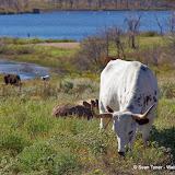 11-09-13 Wichita Mountains Wildlife Refuge - IMGP0411.JPG