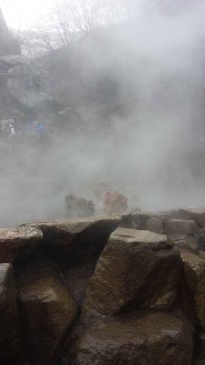 It was very dramatic as we approached the hot spring bath because there was so much steam that we couldn't see any of the snow monkeys at first - and then it blew away and there they were!