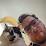 Joshua Lane's profile photo