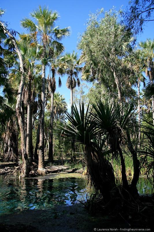 The bitter springs hot bath near Mataranka