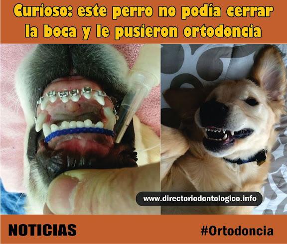 noticias-ortodoncia