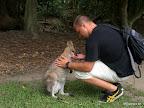 Ich und das Wallabee