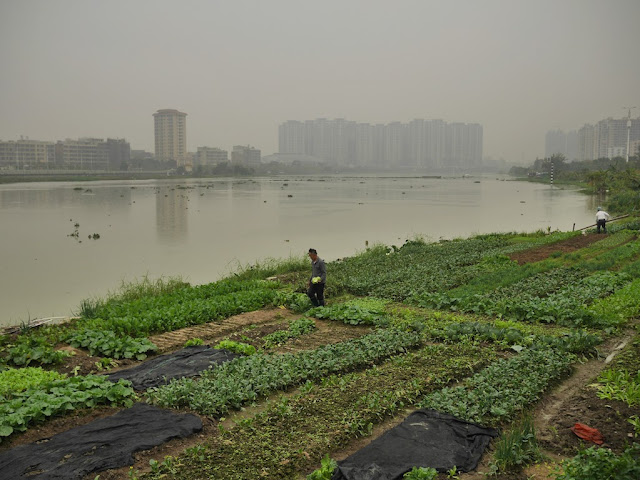 two men tending a riverside farm alongside the Rongjiang North River in Jieyang