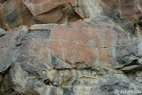 The elements have taken their toll on this panel of petroglyphs.