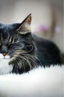 ひげがハートの猫画像