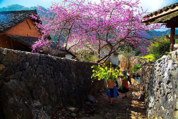 Sapa  Nhung cung kip ron rang trong nhung chiec ao theu hoa