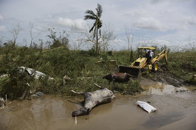Dead horses lie on the side of the road after the passing of Hurricane Maria, in Toa Baja, Puerto Rico. Photo: Carlos Giusti / AP