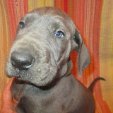 Tolly boy @ 6 weeks
