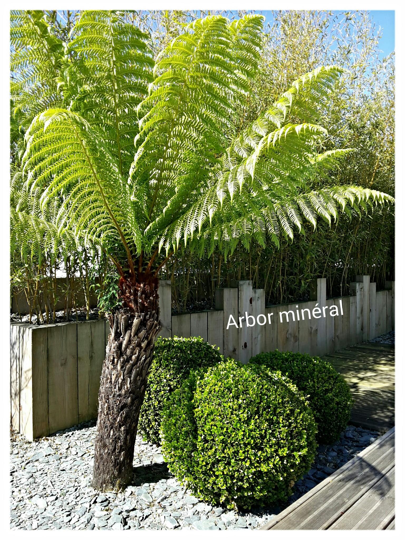 Foug re arborescente vannes paysagiste arbor mineral for Amenagement jardin vannes