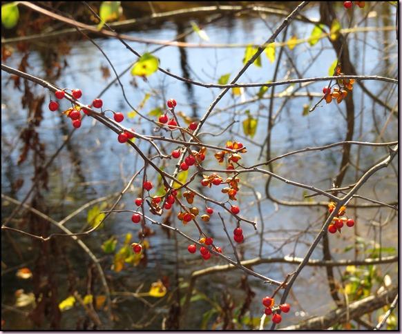 berriesIMG_3804