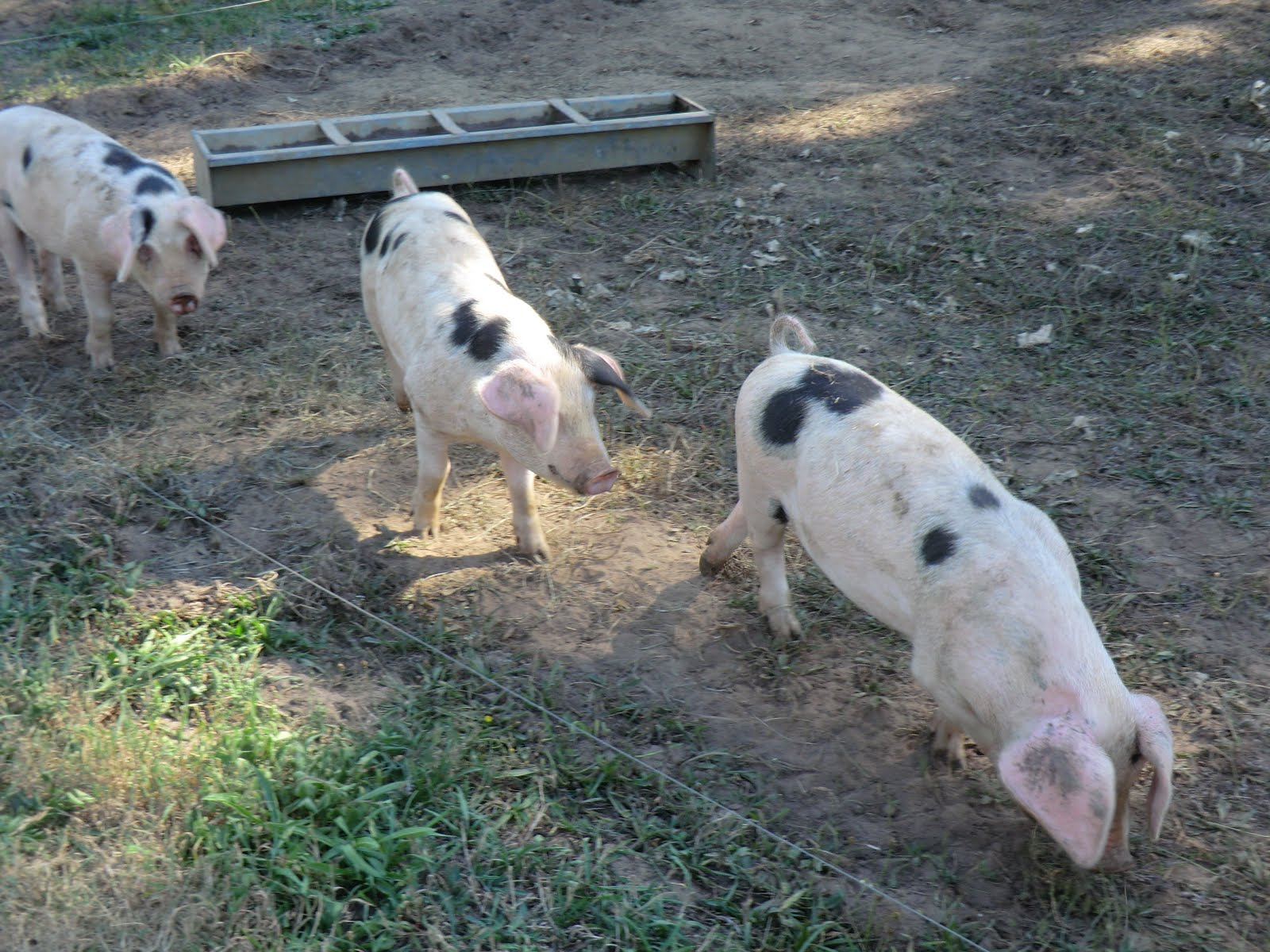 CIMG8495 Please don't order the pork chop!
