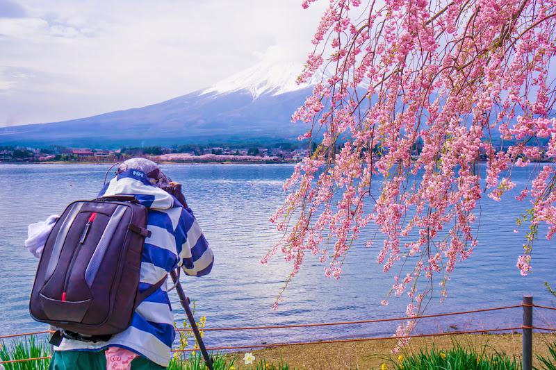 河口湖 長崎公園 桜 写真6