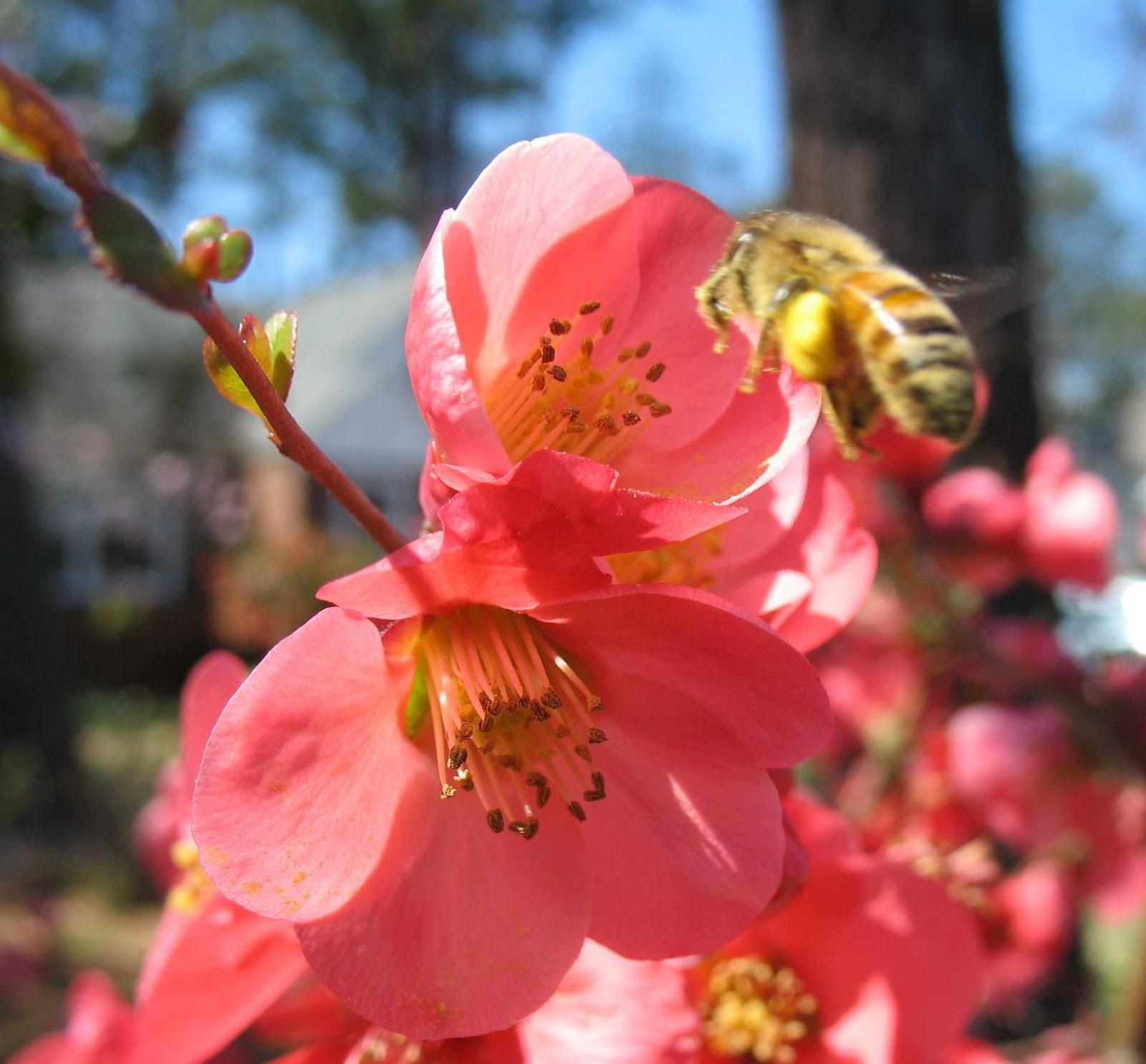 Using Georgia Native Plants: Native Pollinators