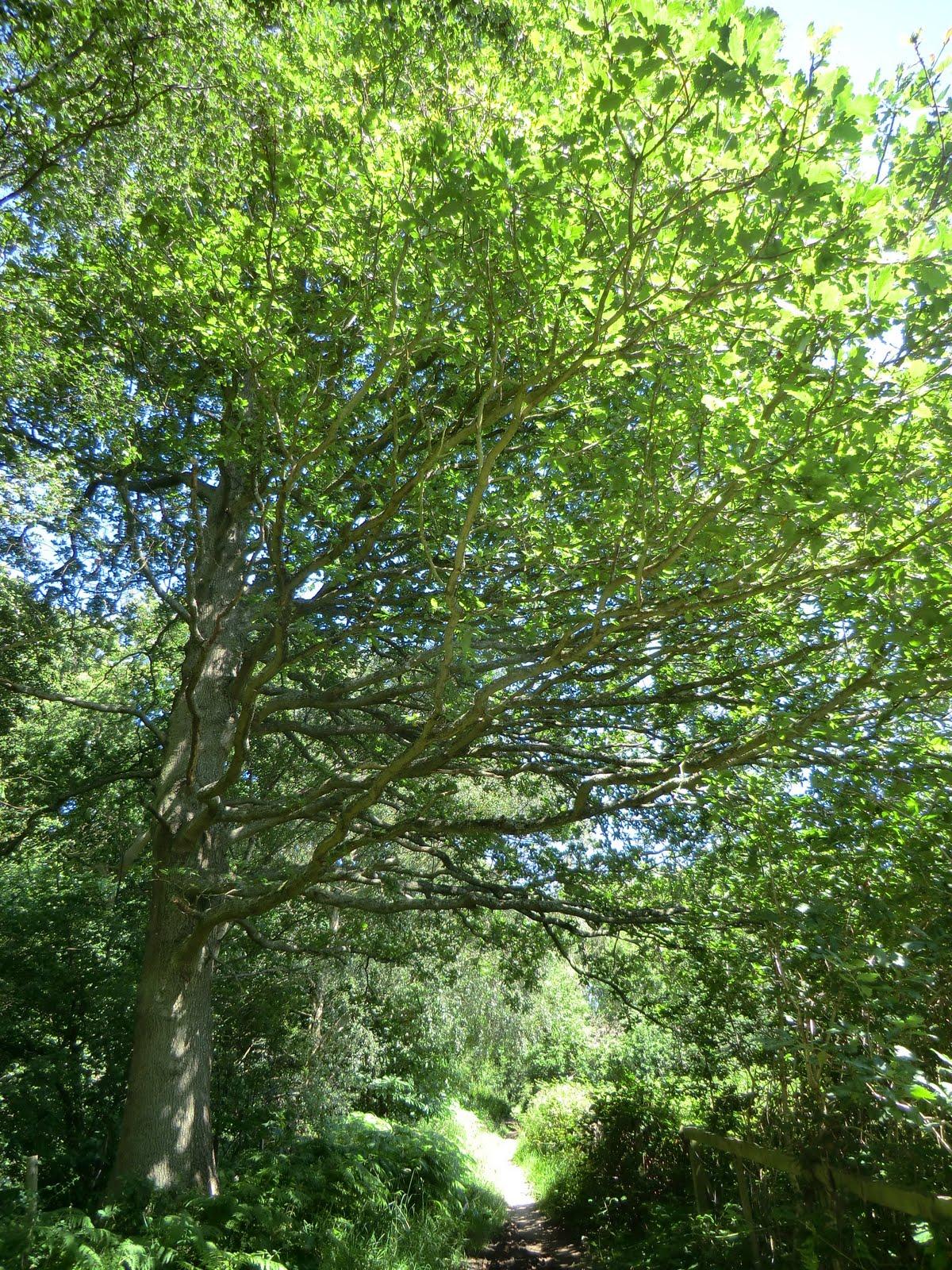 CIMG3161 Frith Wood