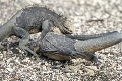 Ecuador-Galapagos-Ferandina-180219-0053-ToWeb