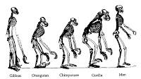 σκελετοί ανθρωποειδών,οστά ανασκαφών,hominid skeletons, bones excavations