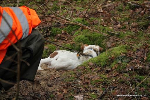 vossenjacht in de Bossen van overloon 18-02-2012 (58).JPG