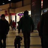 KNON puppys in de stad nov 2008 - DSC09029.JPG