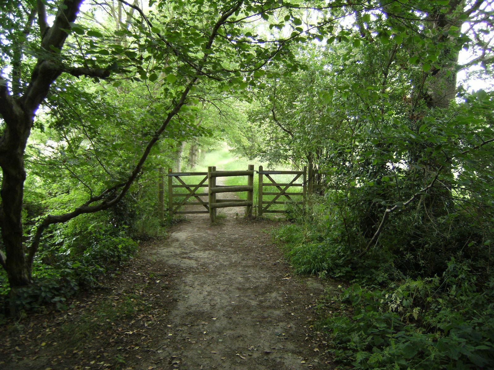 DSCF1018 Woodland path near Hill Hoath
