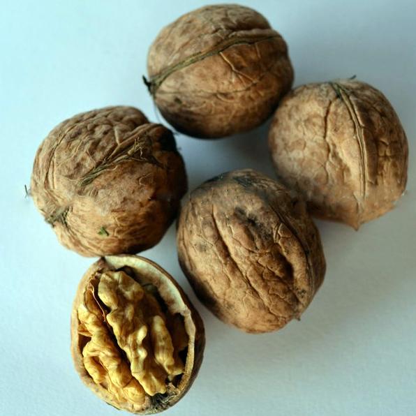 Сейфендорский грецкий орех