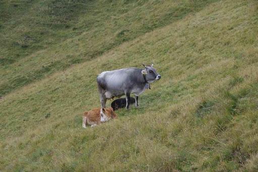 Les Parisiens ça photographie les vaches, c'est à ça qu'on les reconnaît.
