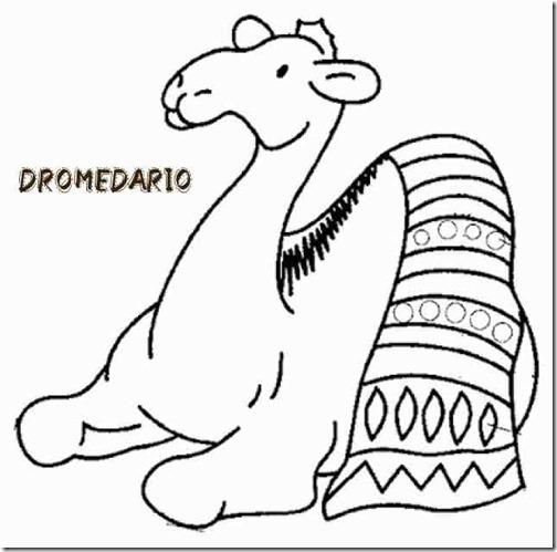 00 dromedario 3 1 (2)