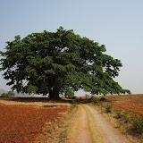 2012-3-25 Hike Kalaw to Inle Lake Myanmar