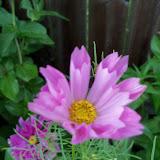Gardening 2012 - 115_2636.JPG