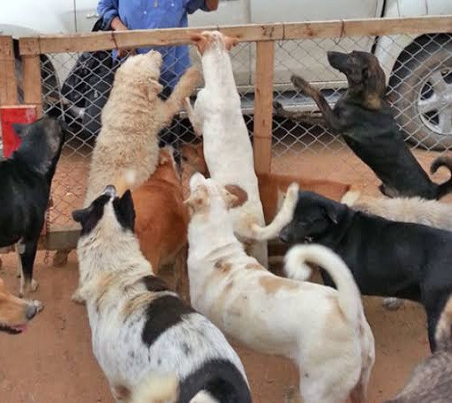 10 dogs owned by school proprietor mauls 2-year-old pupil to death