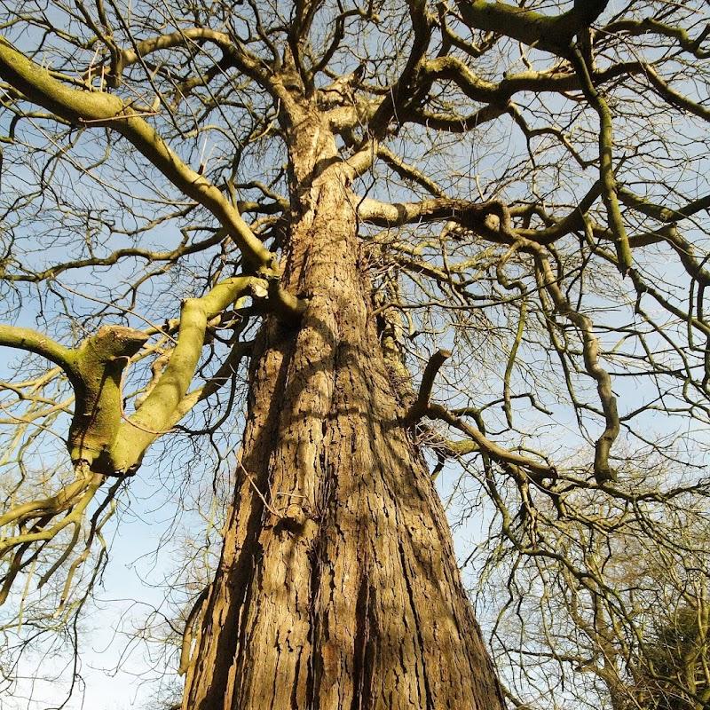 Stowe_Trees_42.JPG