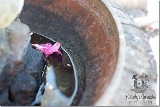 flower in fountain reflection (©Jenny @ Flutterbye Chronicles)
