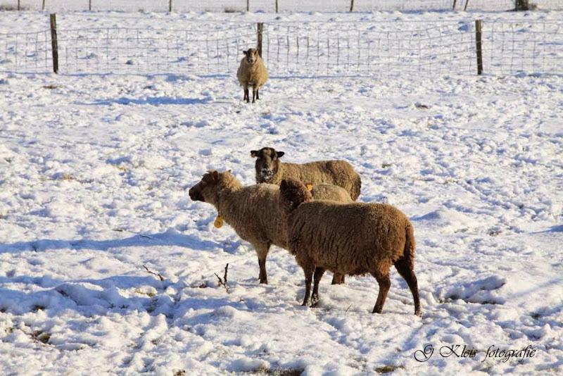 Winter - Winter-034.jpg